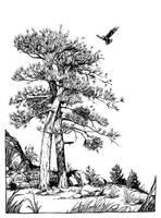Raven Landing by outsidelogic