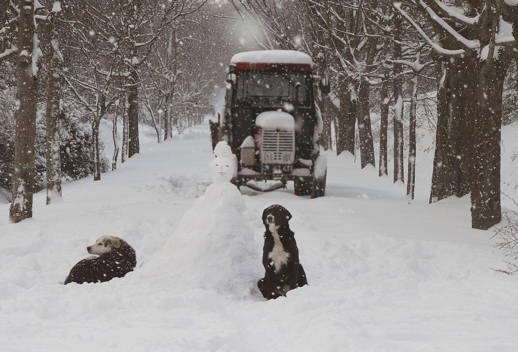 snowland by yiimisekiz