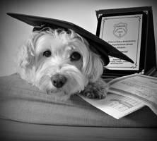 just graduated by yiimisekiz