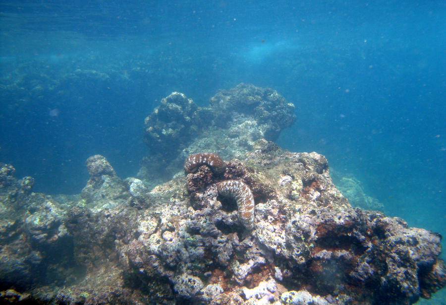 Underwater Coral Rocks by MistressMustang Underwater