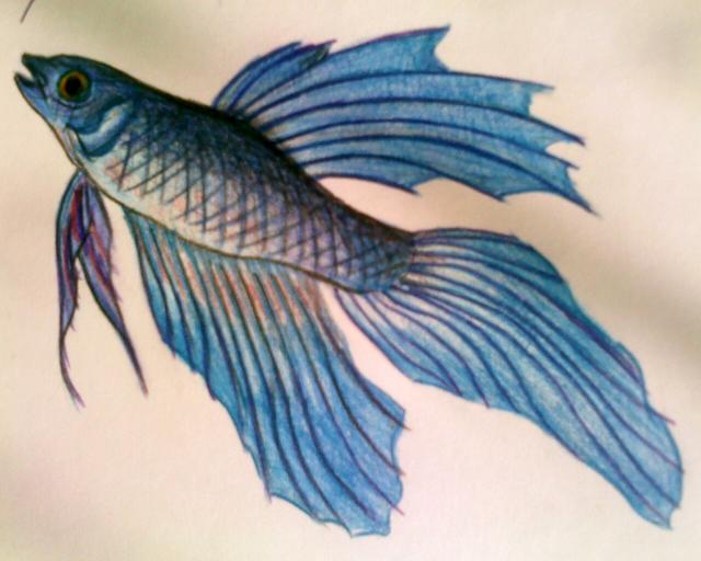 Fish pencil drawing by darkpsychoangel on deviantart for Drawings of fish