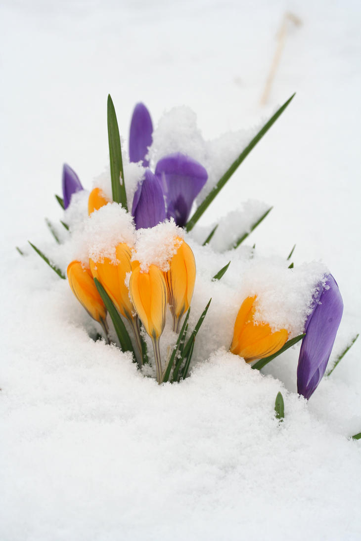 Flowers and snow by fishandtips