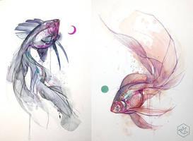 fish yang