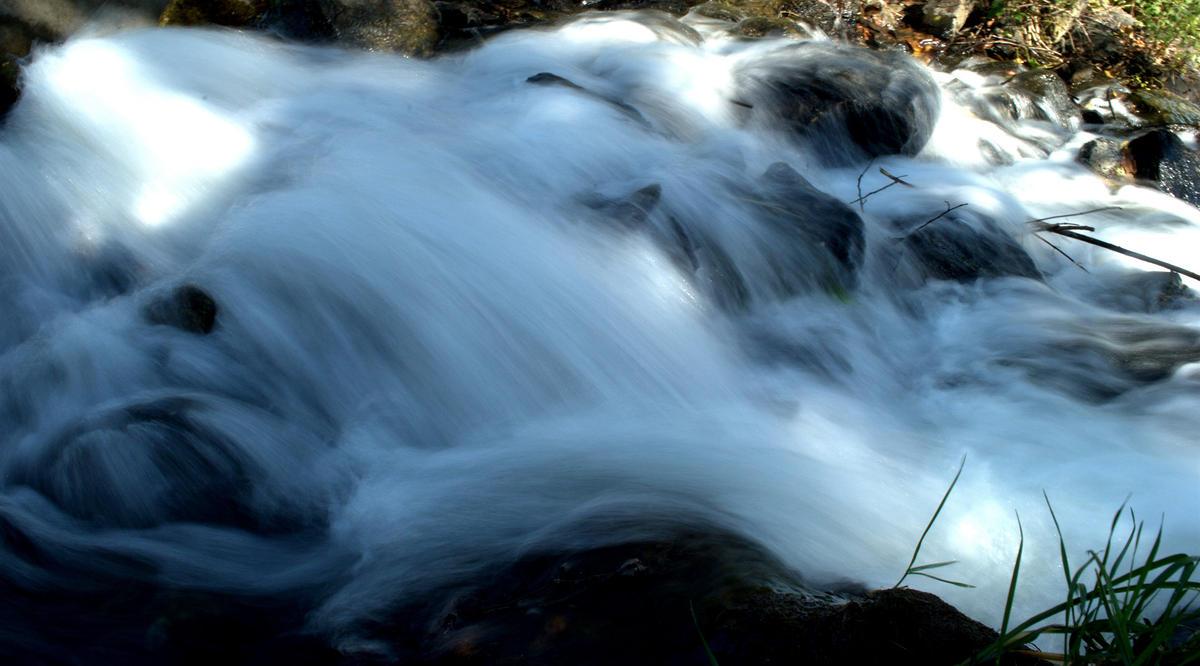 water wild