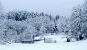 Wintery Pond