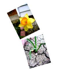 Splicing Flowers