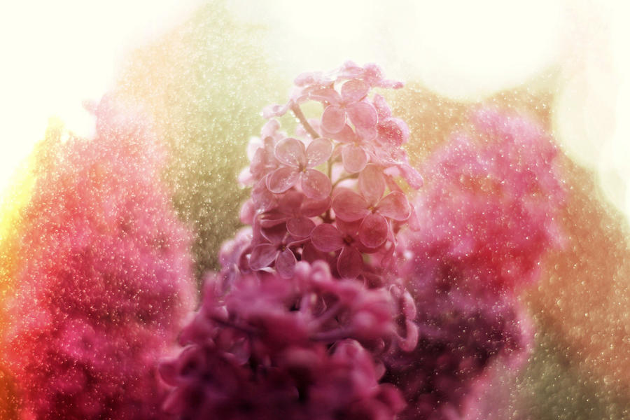 Lilac rain by Malleni-Art