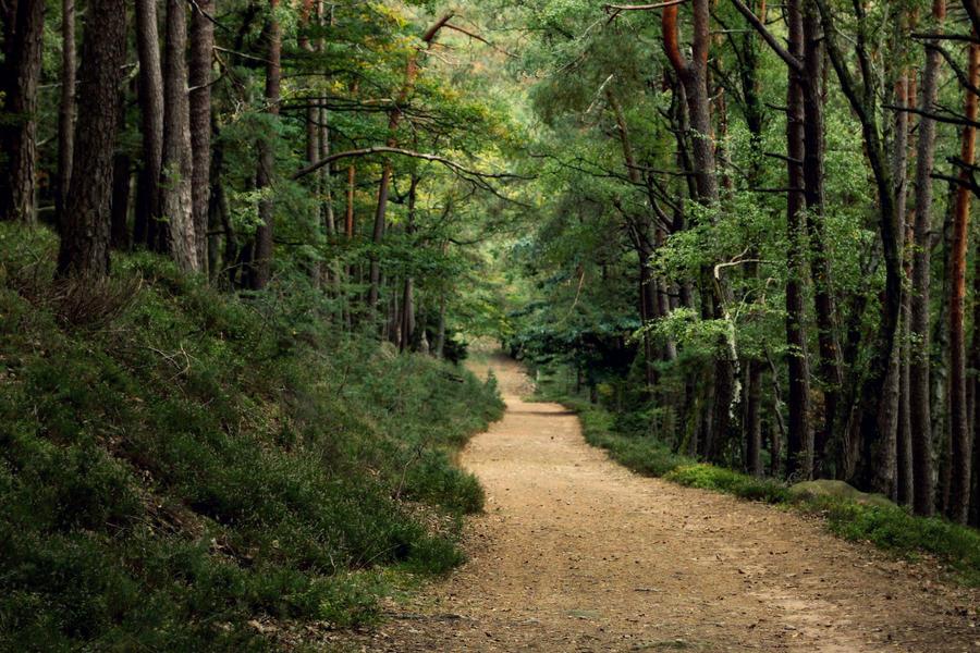 Palatinate forest by Malleni-Art