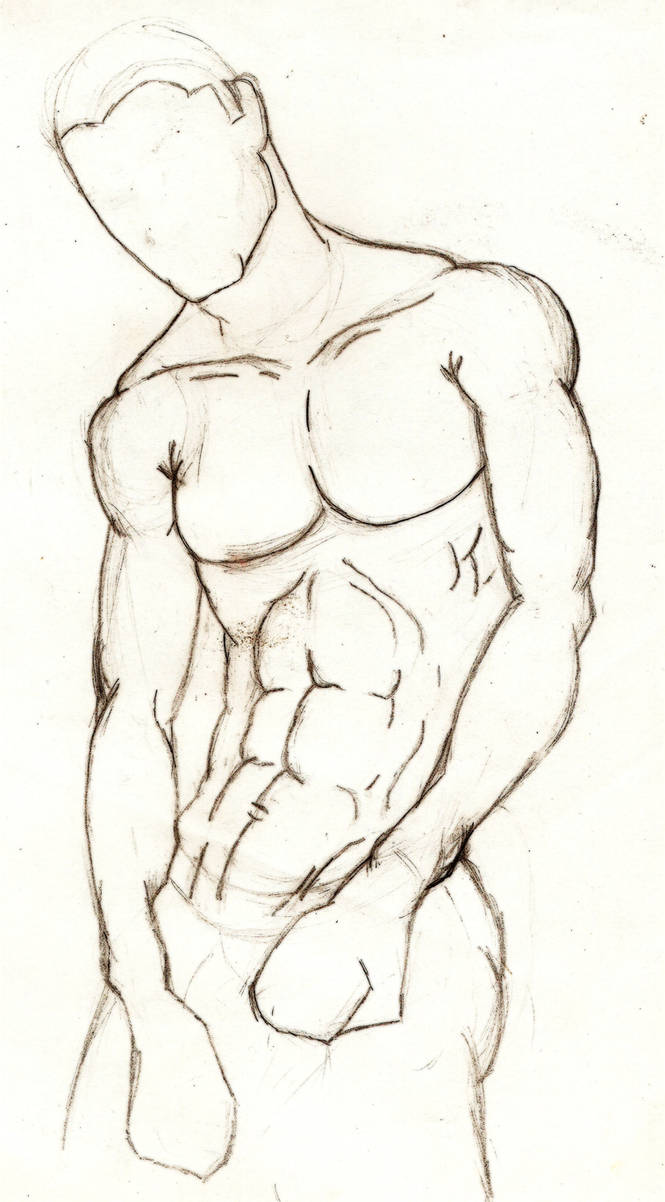 Male anatomy study2