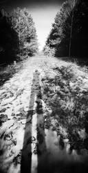 Self Snow I
