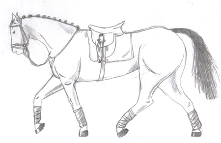 Horse Sketch Collected Trot 129347718 on look at the stars how they shine for