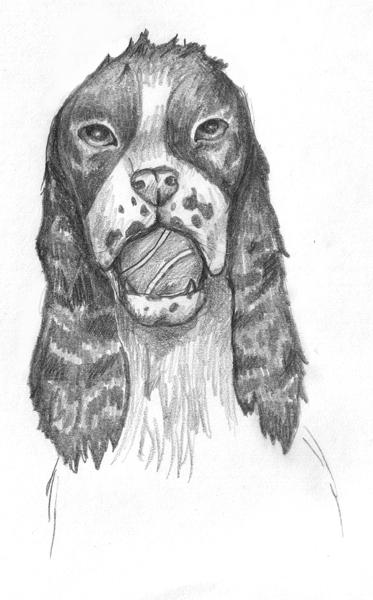 English springer spaniel by lovelynocturne on deviantart for English springer spaniel coloring pages