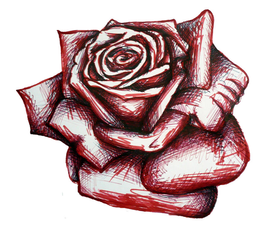 how to draw a 3d red rose