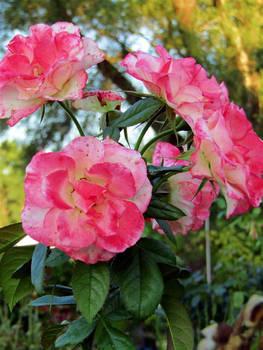 PhotoFriday:Flowers (Medium)