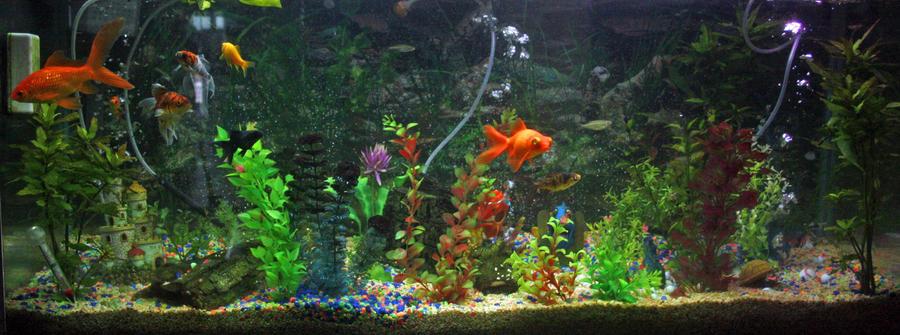 goldfish_tank_by_tamedwhiskers-d3dk1bj.j