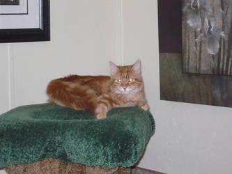 My newest Kitten Mr. Whiskers by deuce6000