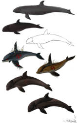 Study - Cetacea by Hayatedragoon