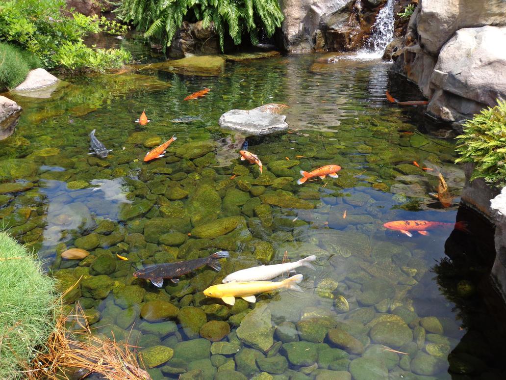 Pin koi pond painting photos on pinterest for Koi pond forms