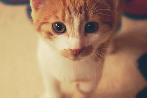look i'm cute by ju-gai
