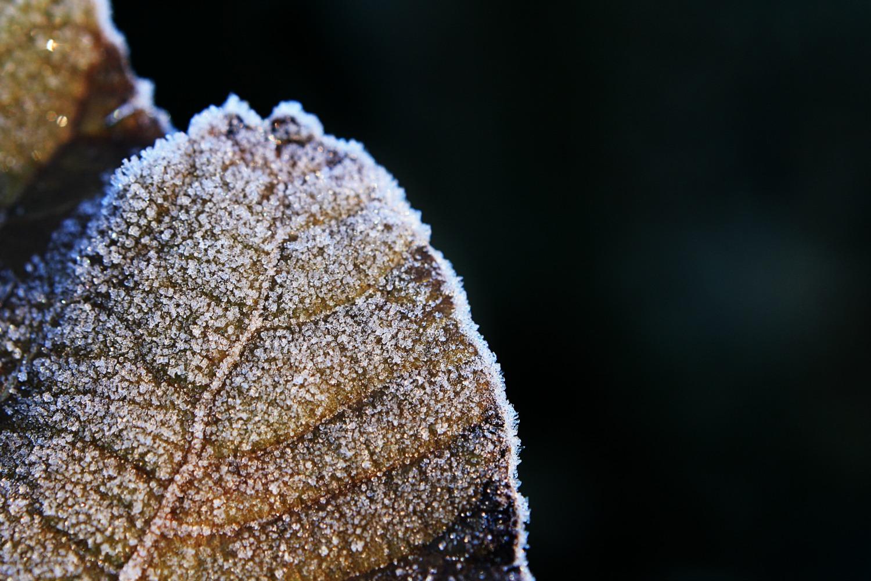 Winter is here by Ritorumonsuta
