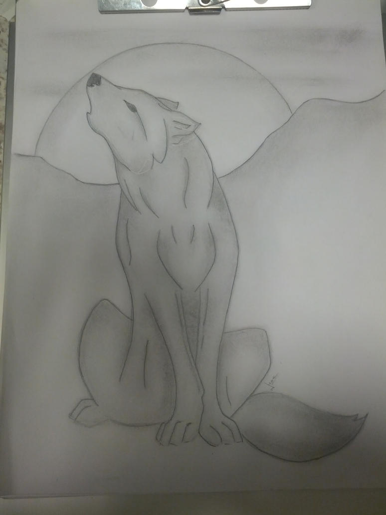 wolf drawing by Gavynne
