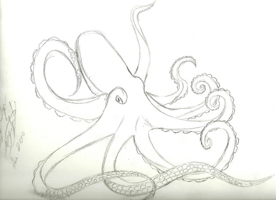 Line Art Octopus : Octopus line art by themiedzinski on deviantart