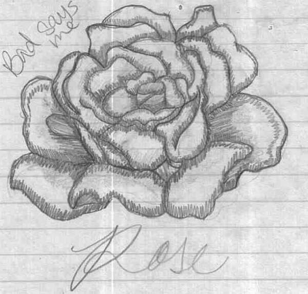 Rose drawing by dawn of love