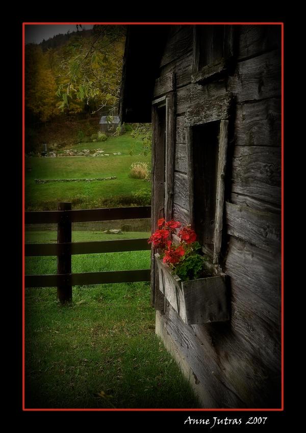 Rustic Flowers by Mystik-Rider