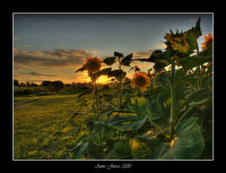 Sun Dance Flowers by Mystik-Rider