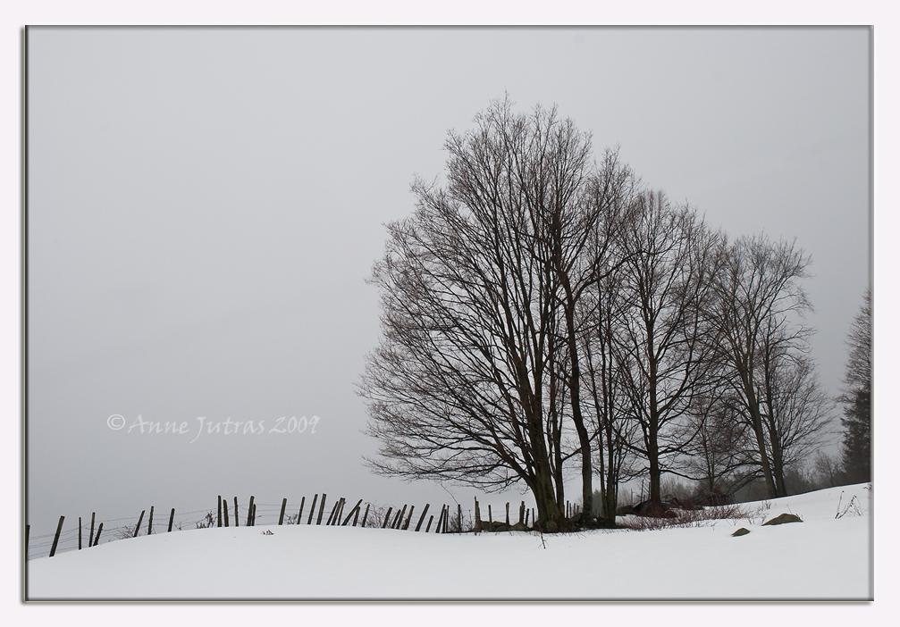 Soft Winter by Mystik-Rider