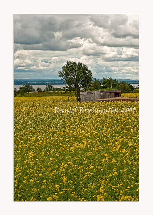 yellow pasture by Mystik-Rider