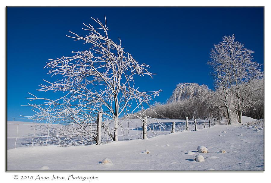 Icy Blue by Mystik-Rider