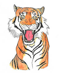 Tiger in Ink and Watercolours  by BethL-Art