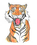 Tiger in Ink and Watercolours