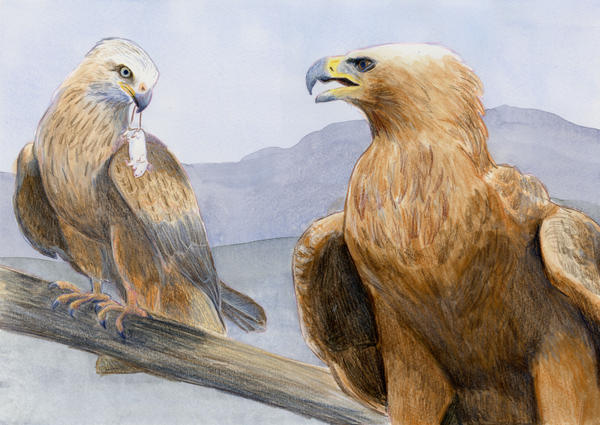 The Eagle and the Kite