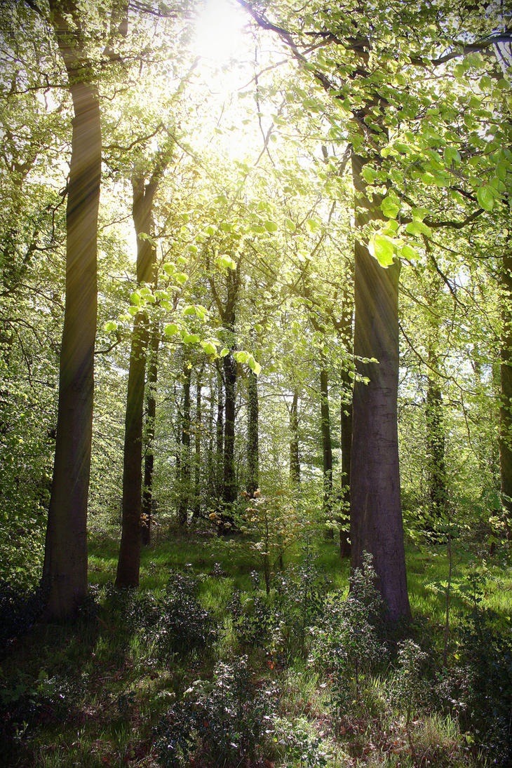 Woodland sunshine by FlowerLadyZen