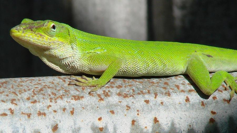 Lizard Skin Paint Html Autos Post