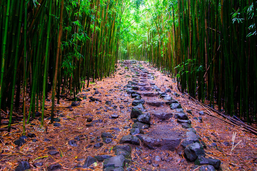 Bamboo Stairs by mikewheels