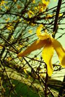 Spring Time Bloom 2 by BreAnn