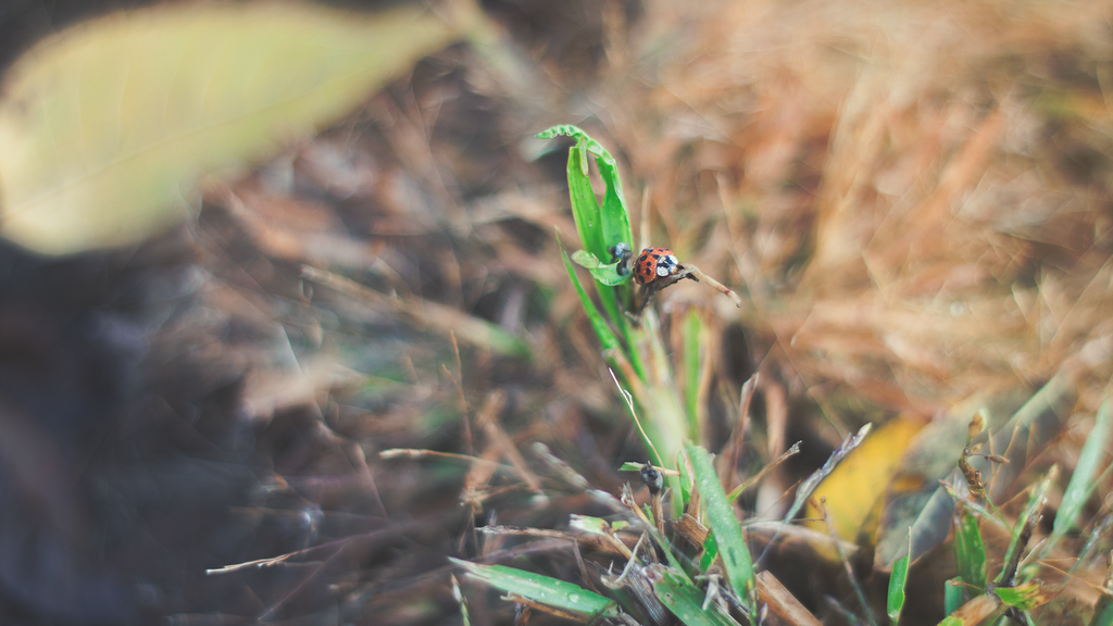 LadyBug by BreAnn