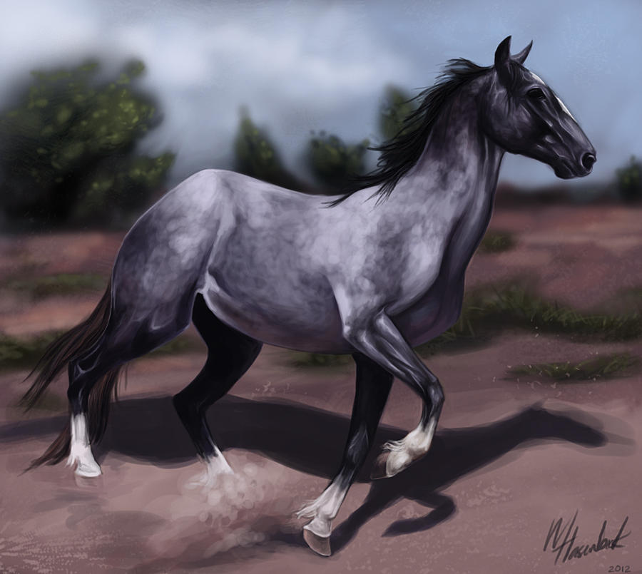 Blue Roan by mJackson