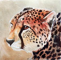 Lonely Cheetah