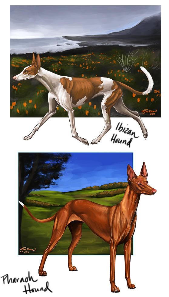 Sighthound Studies #1