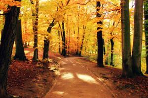 Golden Autumn by serapart