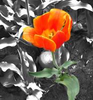 Orange Flower by serene1980