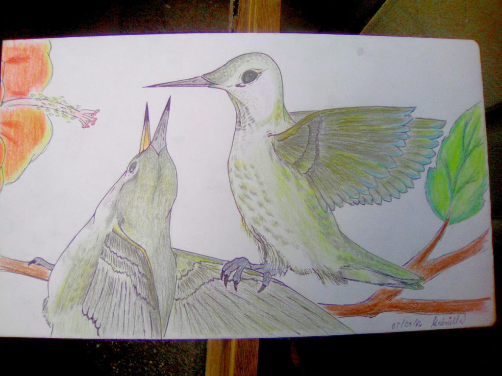Humming birds by imatrashcan2