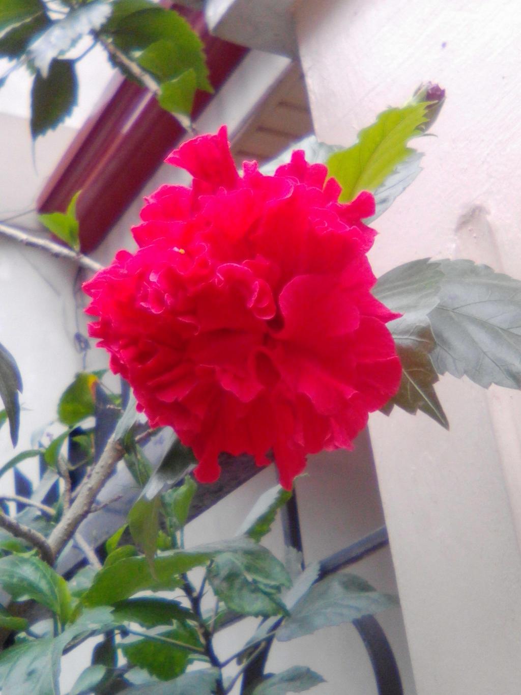 Carnation by imatrashcan2