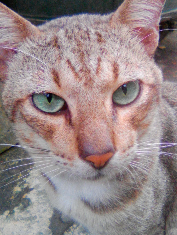 Le Cat by imatrashcan2