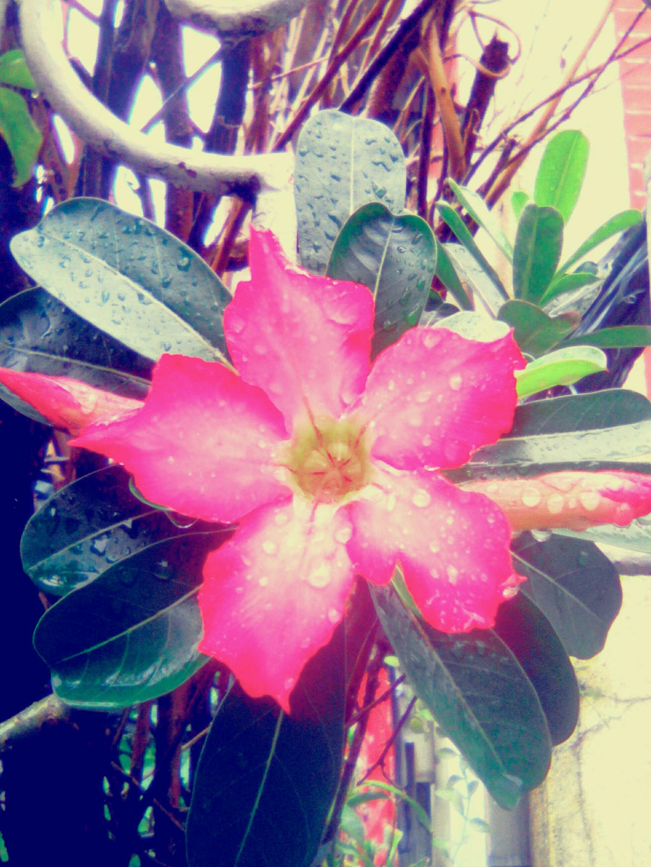 flower2 by imatrashcan2