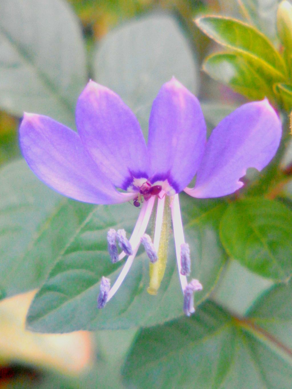 Flower3 by imatrashcan2